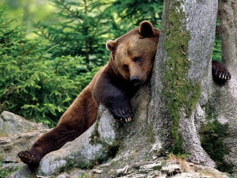rest_stop_brown_bear-1600x1200.jpg